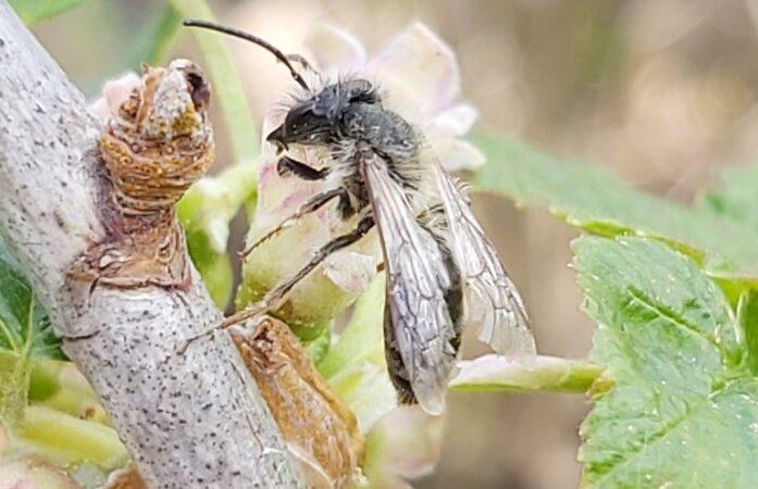 Wildbienen fördern – wie man es richtig macht 2-