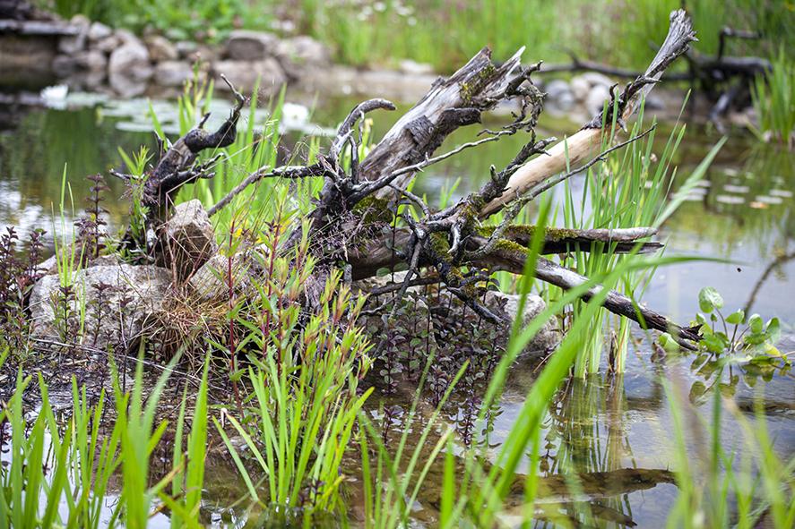 Wasser im Naturgarten 2-
