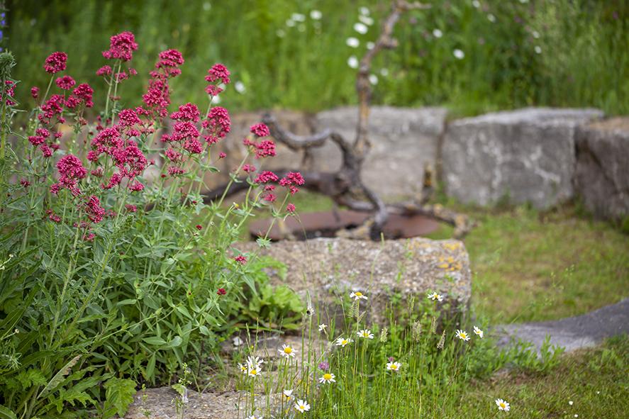 Zwölf Vorurteile über naturnahe Gärten