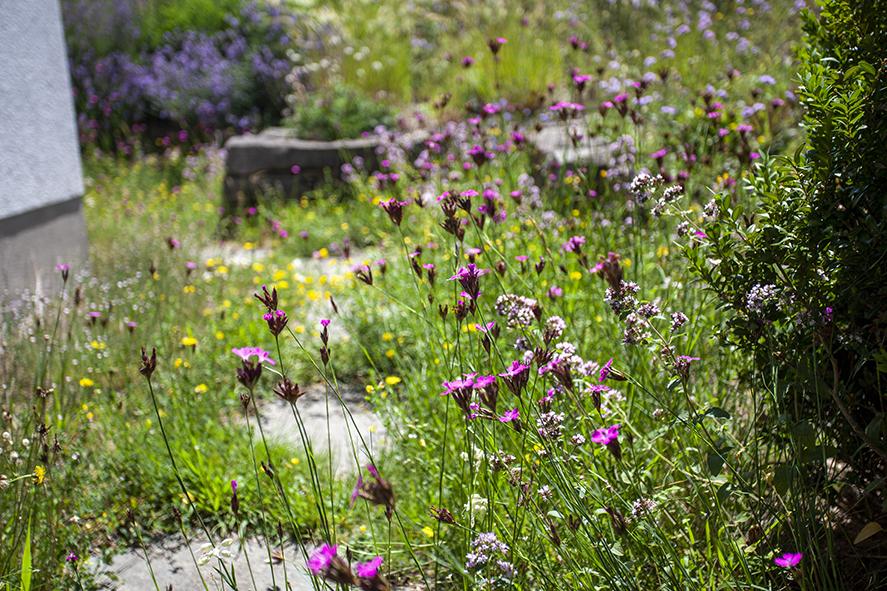 Blumenschotterrasen 2-