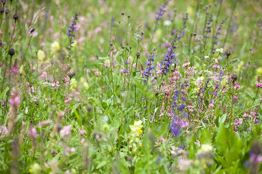 Blumenwiesen 2-