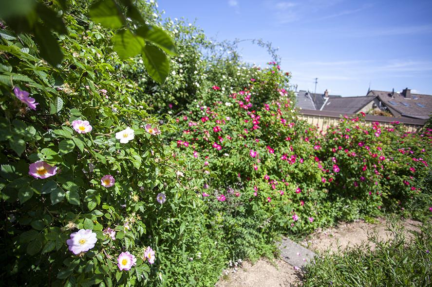 Naturnaher Schaugarten 2-