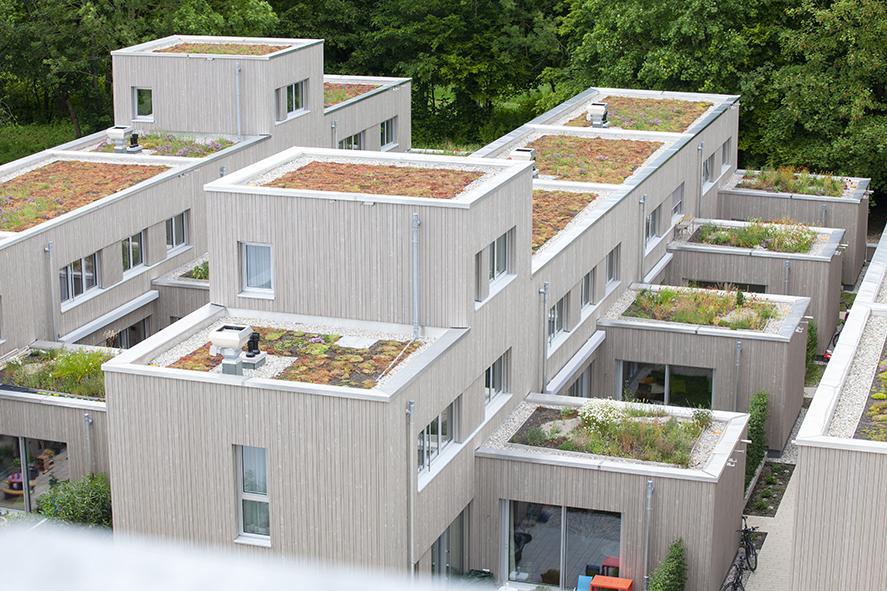 Biodiversitätsdächer 2-