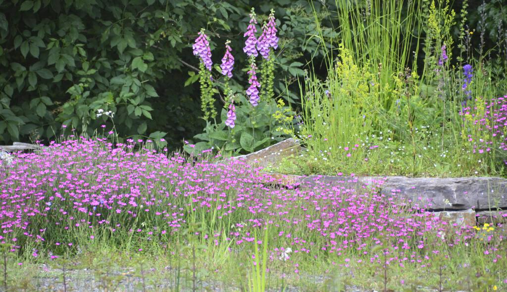 Der Naturgarten 1-